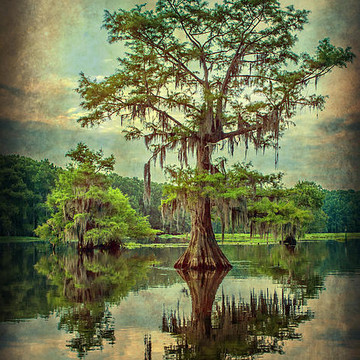 Caddo Lake Collection