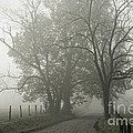 Cades Cove-Tremont Collection