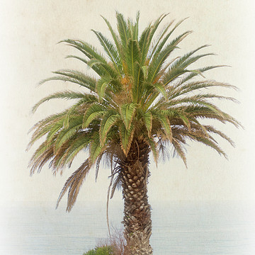 California - Coastline and Beaches Collection