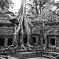 Cambodia - Ta Prohm Temple Collection