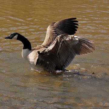Canada Goose Collection