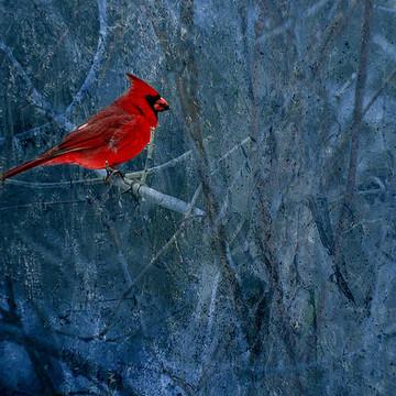Cardinals Collection