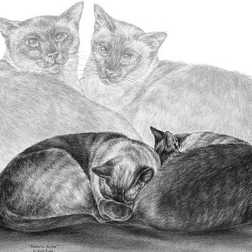 Cat Art Prints Collection