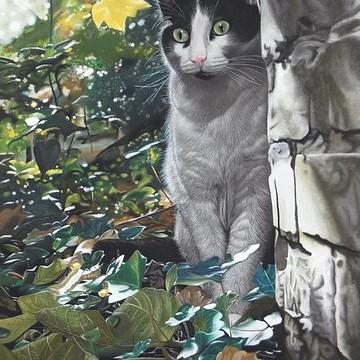 Cat Portraits Collection