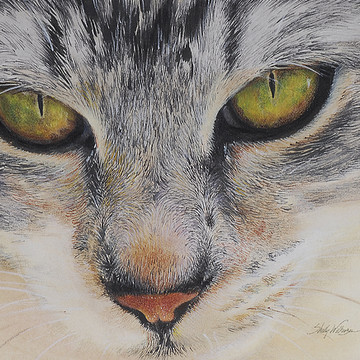 Cat Realism Collection