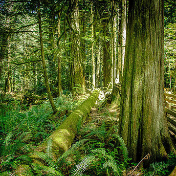 Cathedral Grove Collection