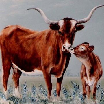 Cattle paintings Collection