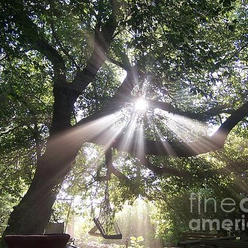 Celestial Sensations