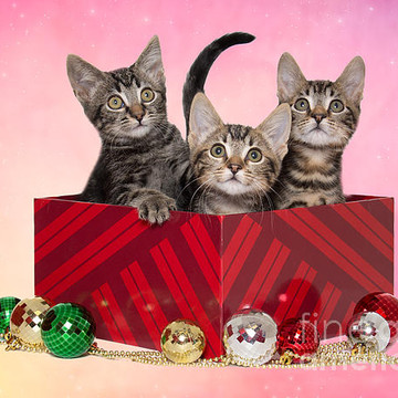 Christmas And Holiday Images Collection