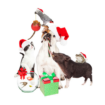 Christmas Gifts for Pet Lovers Collection