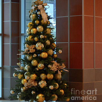 Christmas Trees Photo Gallery Collection