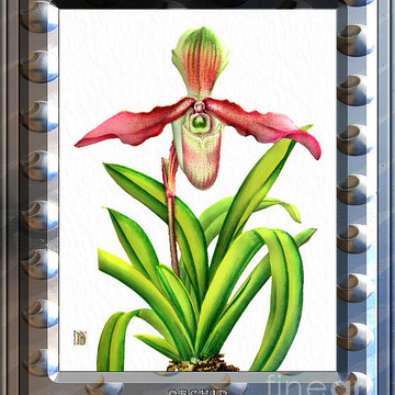 Classic Vintage Orchid and Hyper-Realism Metal Painting Part 1