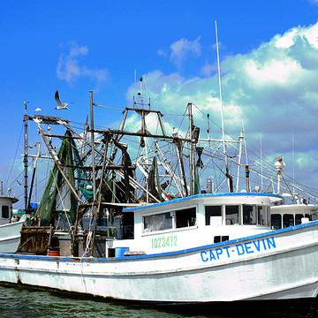Coastal Collection Collection