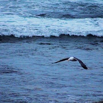 Coastal Photos Collection