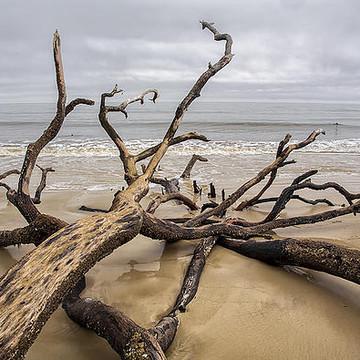 Coastal Scenes Collection