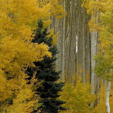 Colorado Fall Colors Collection