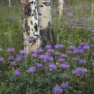 Colorado Landscapes and Closeups Collection