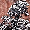 Colorado National Monument Fine Art Photographs Collection