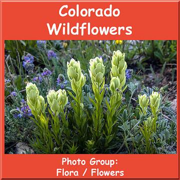 Colorado Wildflowers Collection