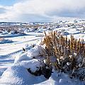 Colorado Winter Collection
