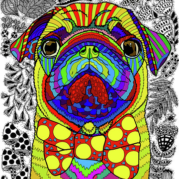 Colorful and Vibrant Pets Collection