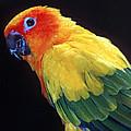 Colorful Parrots Plus Collection