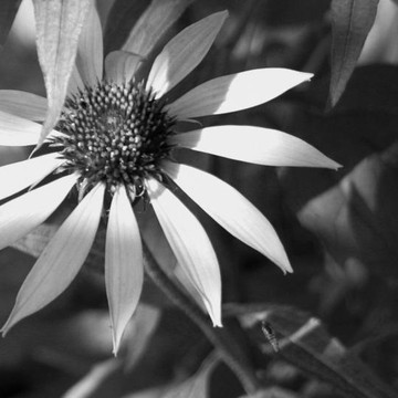 Colorless Collection