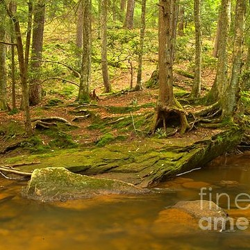 Cook Forest State Park - Pennsylvania Collection