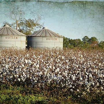 Cotton Fields Collection