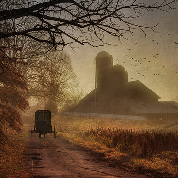 Country Scenery Collection