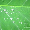 Creative Monsoon Shots Collection