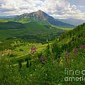 Crested Butte Area and West Elk Mountains of Colorado Collection