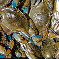 Crustaceans and Mollusks  Collection
