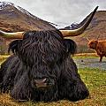 Curious Coos Collection