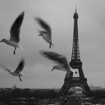 Danica Radman  Paris Gallery