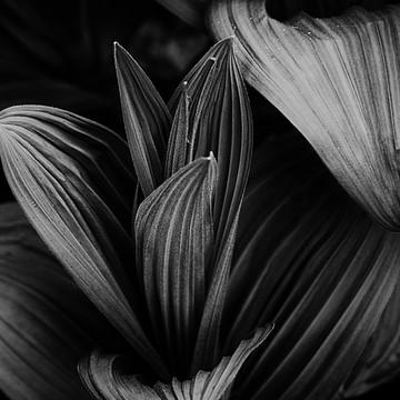 Dark Forest Collection