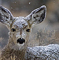 Deer-Stock Images Collection