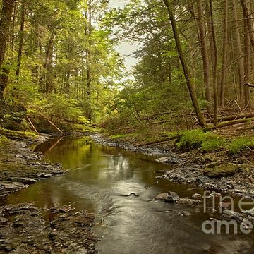 Delaware Water Gap Collection