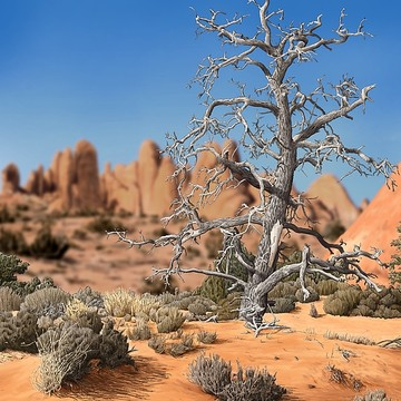 Desert Landscapes Collection