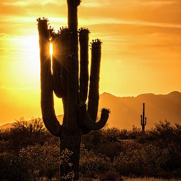 Desert Southwest Collection