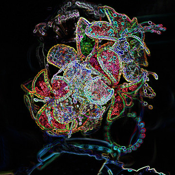 Digital Art Collection