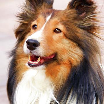 Digital Art-Pet Portraits Collection