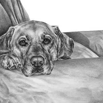 Dog Breed Art in black and white Collection
