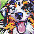 Dog Breeds- A Collection