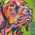 Dog Breeds- V Collection