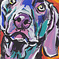 Dog Breeds- W Collection