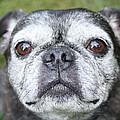 Dog Portfolio Collection