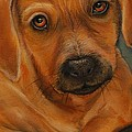 Dogs Drawings and Paintings Collection