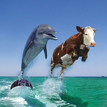 Dolphin and Cow