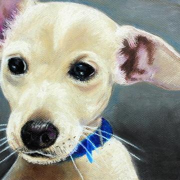 Domestic Animal Portraits Collection